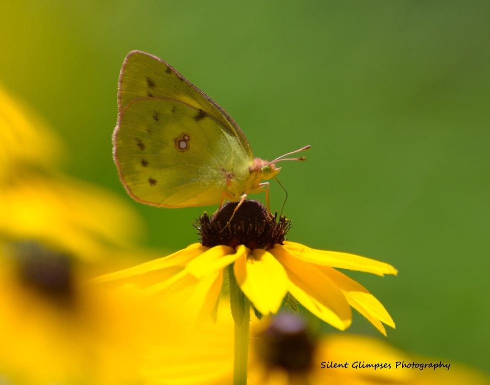 5f6776610d8b5_butterfly.jpg.0a63aaa25de25c5c99087ab310aa2b3e.jpg