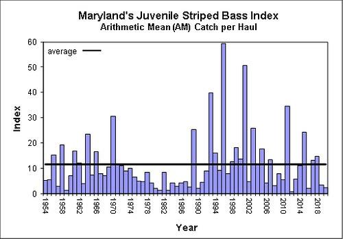 striped-bass-spawning-chesapeake.jpg
