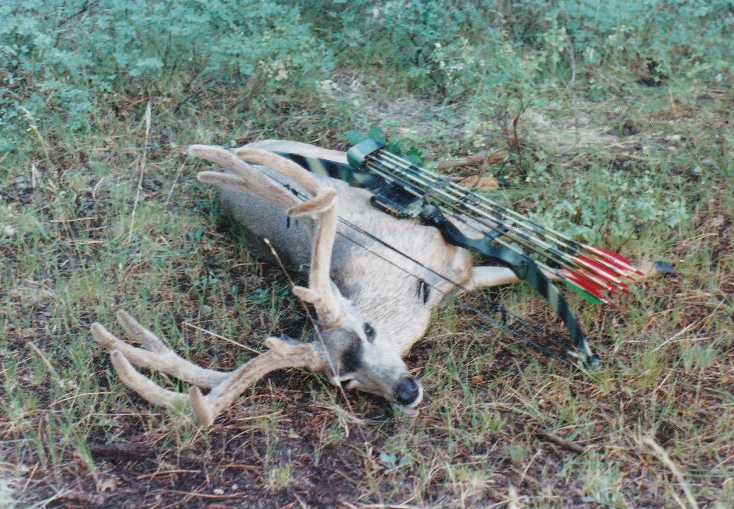 1986 Elk Ridge Buck.jpg