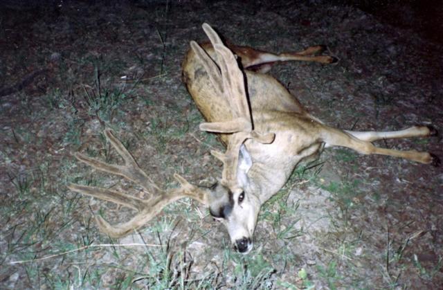 1990 Elk Ridge Buck.JPG