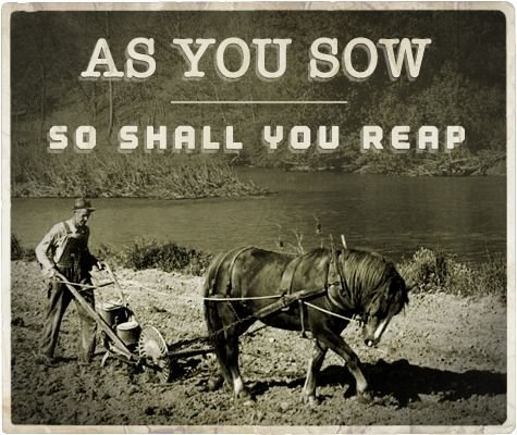 as you sow.1.jpg