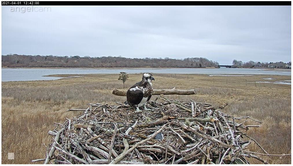 narrow_river_osprey.jpg