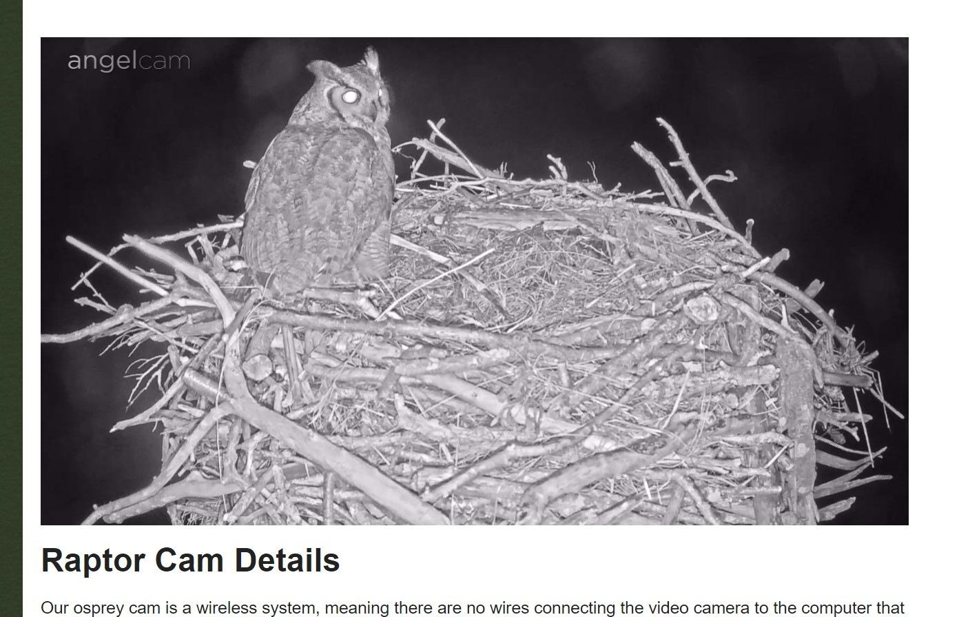 owl-in-nest.jpg