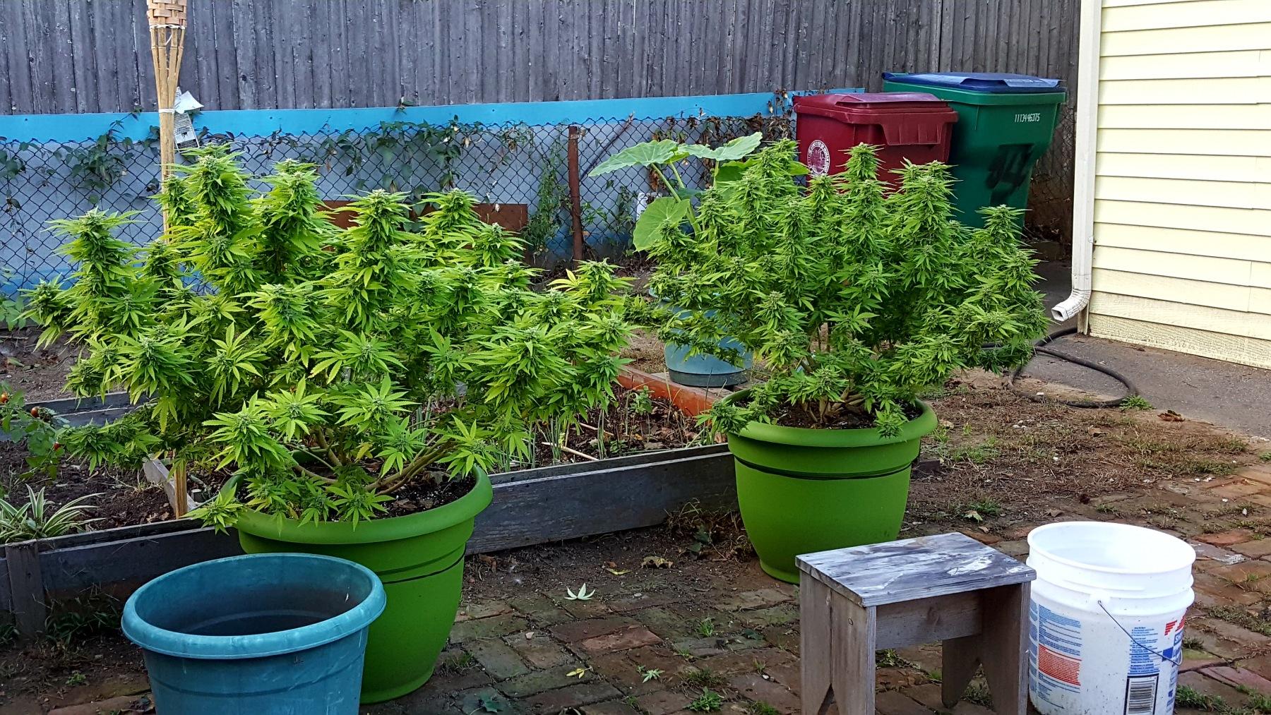 short plants.jpg
