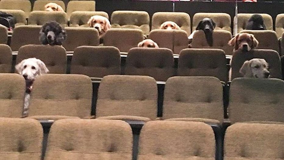 dogs-theater-2-k9-country-inn-service-dogs (1).jpg