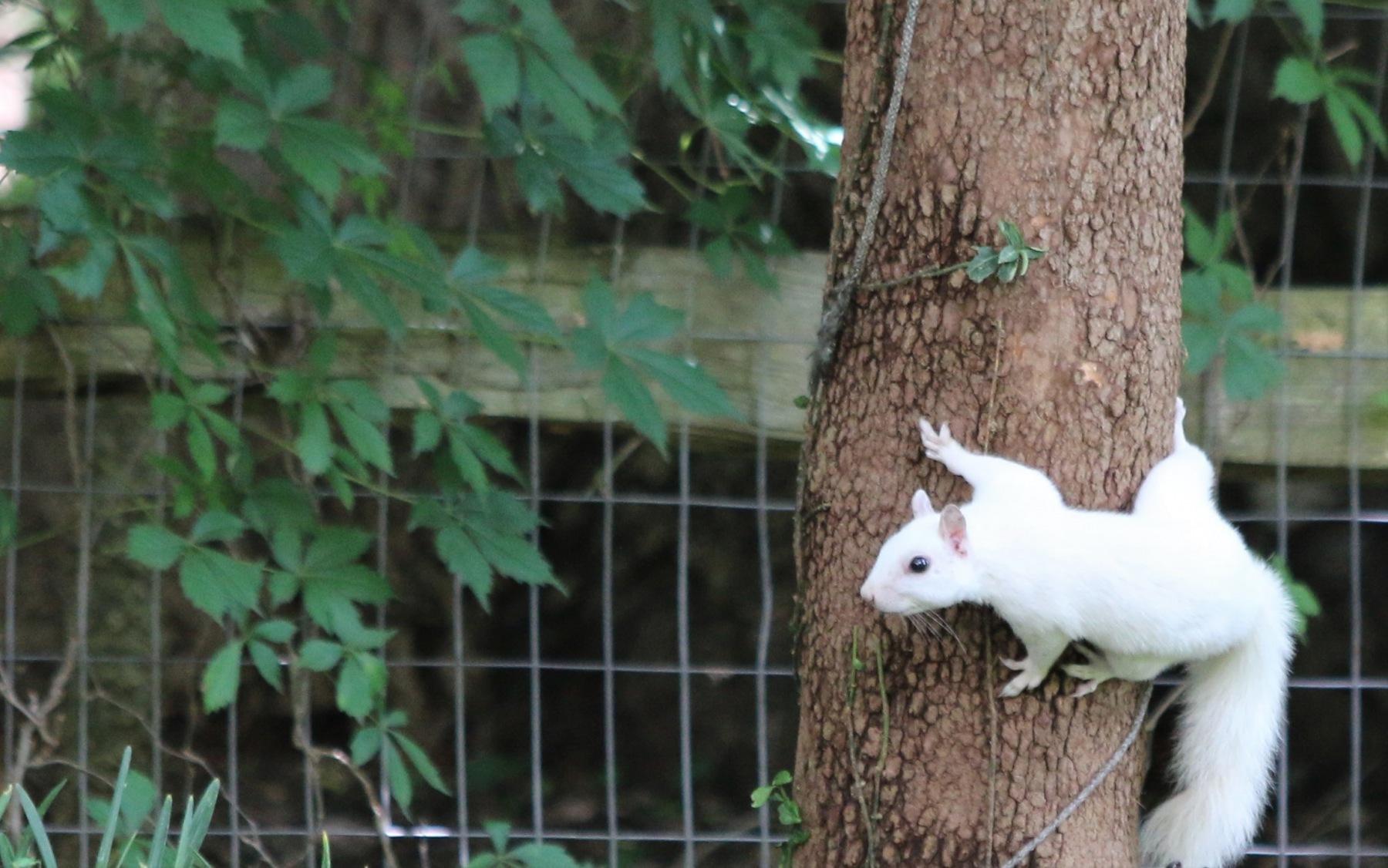 squirrel.JPG.1532300ae8cbb54018a957e491fef32f.JPG