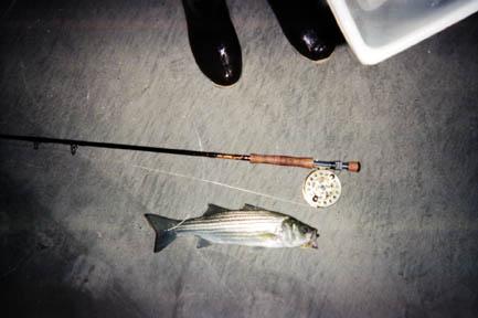 petfish.JPG