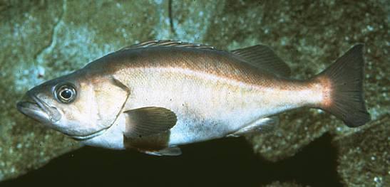 mystfish7.jpg