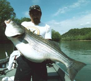 Land locked stripers main forum surftalk for Striper fishing lake cumberland