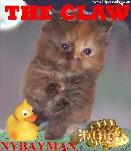 the_claw.jpg